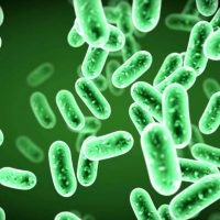 microbio2